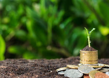 Money growth, seedling on top. concept coins Royalty Free Stock Images