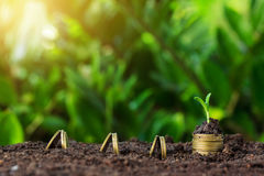 Money growth and seedling on top. concept coins in soil. Royalty Free Stock Photos