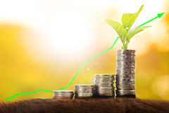 Money growth with stack coin. For saving your budget for invest in the future Royalty Free Stock Photo