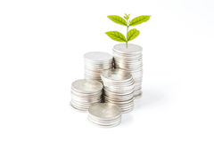 Money Growth. On white background Royalty Free Stock Images