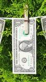 Money hanging on a tree Stock Photo