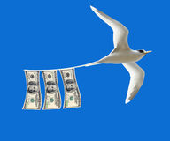 Money laundering. Concept dollar bills on tail of a white bird Stock Photography