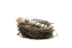 Money lies in a bird`s nest on a white background. Stock Images