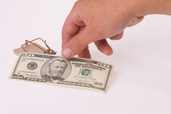 Money in mousetrap Stock Images