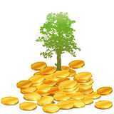 Money nature. Isolated business nature abstract money ecology finance Stock Photo