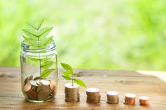 Money in nature Stock Photo