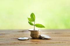 Money in nature Royalty Free Stock Photos