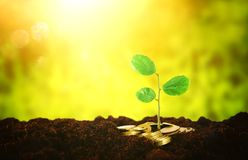 Money next to green plant over fresh soil. Stock Images