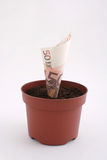 Money note in the pot. Euro money note growing in the pot stock image
