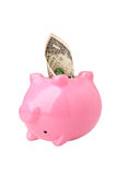 Money out of a piggy bank Royalty Free Stock Photos
