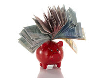 Money pig with euro paper Royalty Free Stock Photos