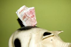 Money pig with money. Money pig with fifty pounds sterling sticking out the top of it Stock Photography