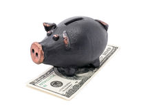 Money and piggy bank Stock Photography