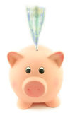Money in the piggy bank Royalty Free Stock Image