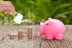 Money and piggy bank with woman hand  hold watering can, Growth. Of savings money concept Royalty Free Stock Photography