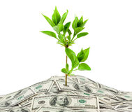 Money and plant Royalty Free Stock Images
