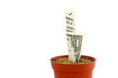Money Plant. A small flower pot with a dollar bill that seems to be growing into a money tree. This is one plant that could be a real investment Royalty Free Stock Photos