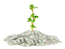 Money and plant Stock Images