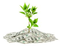 Money and plant Royalty Free Stock Photos