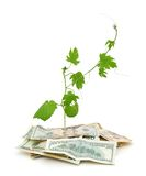 Money and plant Stock Photos