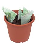 Money plant. Euro notes in a pot royalty free stock images