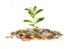 Money and plant. royalty free stock photography
