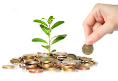 Money and plant. Stock Image