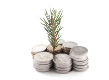 Money and plant Royalty Free Stock Image