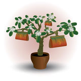 Money plant, flower in pot Royalty Free Stock Photography