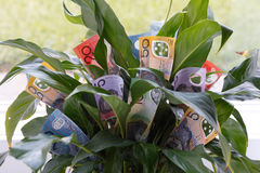 Money Plant Royalty Free Stock Images