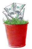 Money Plant Stock Image