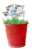 Money Plant Stock Photos