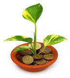 Money plant Stock Photo