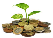 Money plant Royalty Free Stock Photography