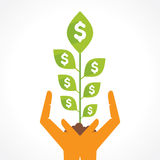 Money plant in hand concept Stock Photography