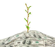 Money and plant Stock Image