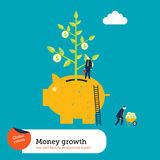 Money Plant in a Piggy Bank Royalty Free Stock Photography