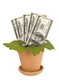 Money Plant Revised 2 Royalty Free Stock Photography