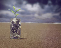 Money Plant sprout Growing in coins bottle retro style Stock Images