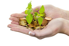 Money and plant. symbol photo save Royalty Free Stock Image