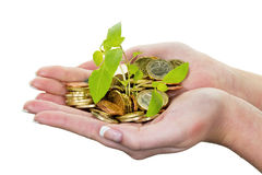 Money and plant. symbol photo save Stock Photo