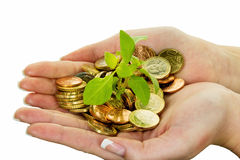 Money and plant. symbol photo save Royalty Free Stock Photos