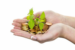 Money and plant. symbol photo save Royalty Free Stock Photography