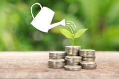 Money and plant with watering can and money tree, Saving money c. Oncept, financial savings to buy a house,trees growing in a sequence of germination on piles of royalty free stock photography