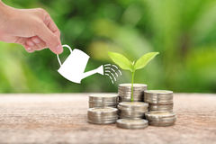 Money and plant with woman hand  hold watering can and tree, Sav Stock Images