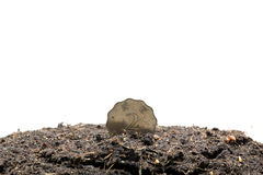 Money Planting Royalty Free Stock Photos