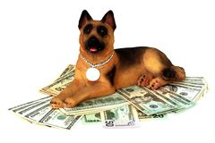 Money and protection. The reliable security guard of your money Stock Photos