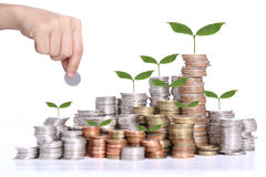 Money Saving Concept With Coin Stack And Tree Growing Concept Stock Photo