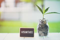 Money saving and investment financial concept. Plant growing in savings coins with text INSURANCE on small billboard. On wooden table. Copy space for your text stock photography