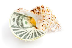 Money in the seashel Royalty Free Stock Image